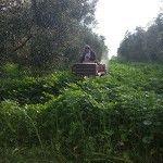 aceite de oliva virgen extra ecologico hojiblanca premium
