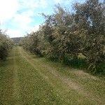 aceite antojos del sur ecologico hojiblanca premium