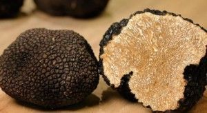 All you need to know about truffles not to go back to throwing your money away