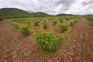 Bodegas Aragonesas viñas