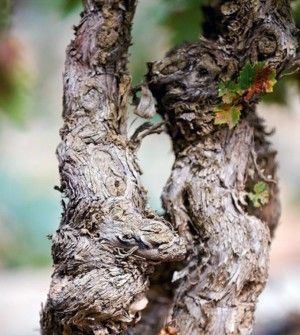 Bodegas LAN Rioja Viñas