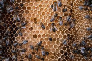 comprar miel ecológica online