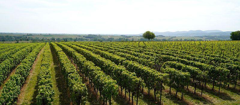 Comprar vinos de Aragón