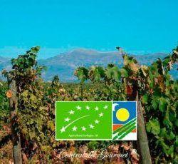 Gourmet Organic Wines
