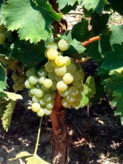 Gourmet Sweet Wines