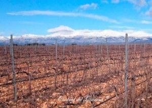 idrias viñedos ecologicos somontano