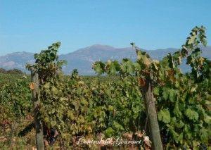 idrias viñedos ecologicos d.o. somontano