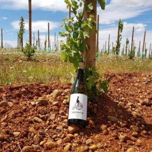 SAPIENTIA Verdejo ecologico 2018 RUEDA viñas