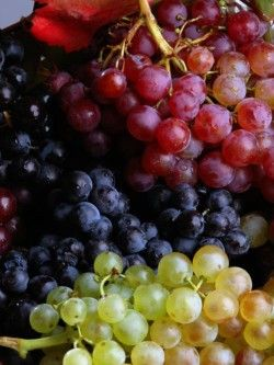Gourmet Wines