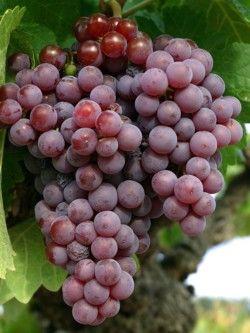 Vinos Rosados Gourmet